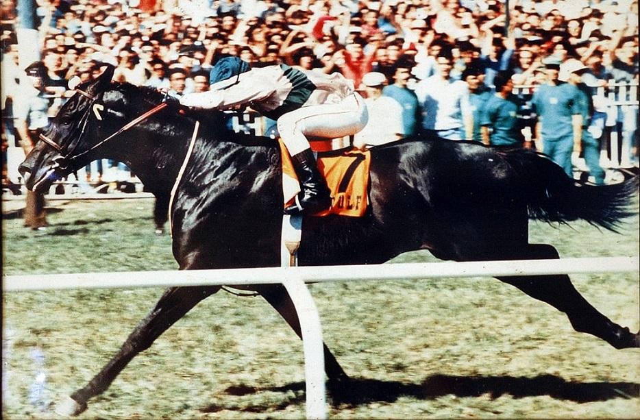 El caballo Wolf ganador de la Triple Corona de Chile