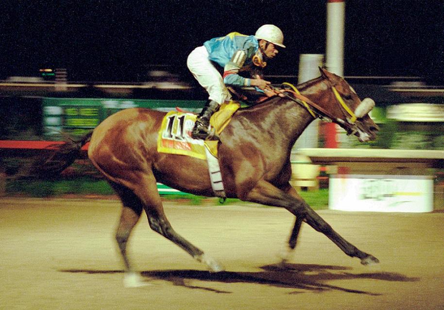 My Own Business, horse, Clásico del Caribe, 3 de diciembre de 2000, Hipódromo El Comandante, San Juan de Puerto Rico. Foto: Cortesía