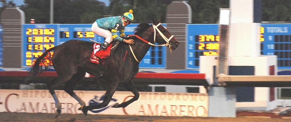 Taconeo, horse, Water Poet, Copa Confraternidad del Cribe, 2 de diciembre de 2008, Hipódromo Camarero, San Juan de Puerto Rico. Foto: Cortesía