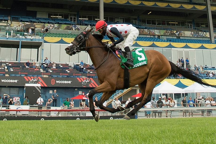 March To The Arch, horse, Arch, Niagara Stakes, domingo, 25 de julio de 2021, Woodbine. Foto: Michael Burns Photography