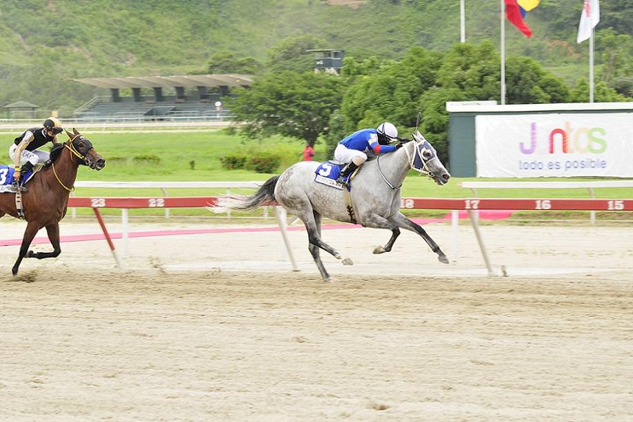 Afrodita de Padua, horse, Haras Oropal, XXI Clásico Hípica Nacional, domingo, 5 de septiembre de 2021, La Rinconada. Foto: José Antonio Aray