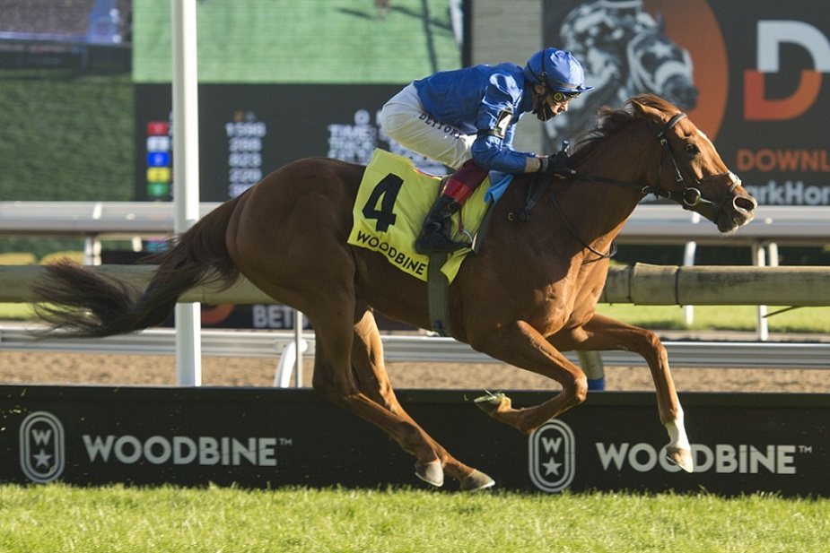 Albahr, horse, Duwabi, Summer Stakes, domingo, 19 de septiembre de 2021, Woodbine. Foto: Michael Burns Photography