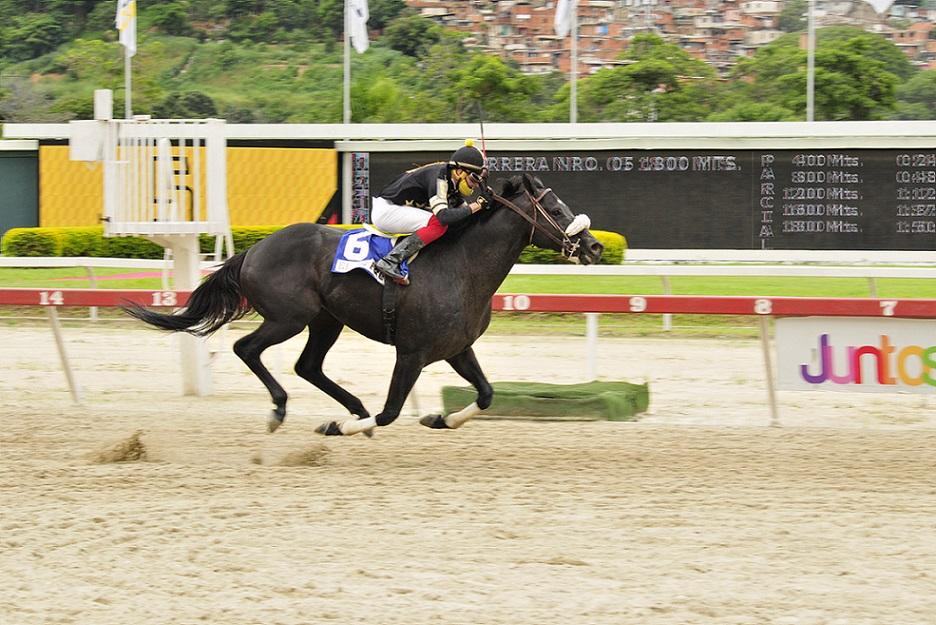 El De Froix, horse, Haras La Orlyana, LXXVIII Clásico Jockey Club de Venezuela, domingo, 5 de septiembre de 2021, La Rinconada. Foto: José Antonio Aray