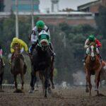 Ibérico, horse, Zeewat, División Clásico Carlos Gómez, sábado, 4 de septiembre de 2021, Hipódromo de Las Américas. Foto: Miguel Ángel Espinoza
