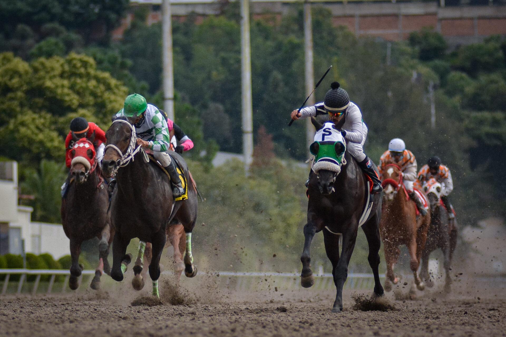 Iniesta, horse, Cuadra San Isidro, Clásico Carlos Gómez, sábado, 4 de septiembre de 2021, Hipódromo de Las Américas. Foto: Miguel Ángel Espinoza