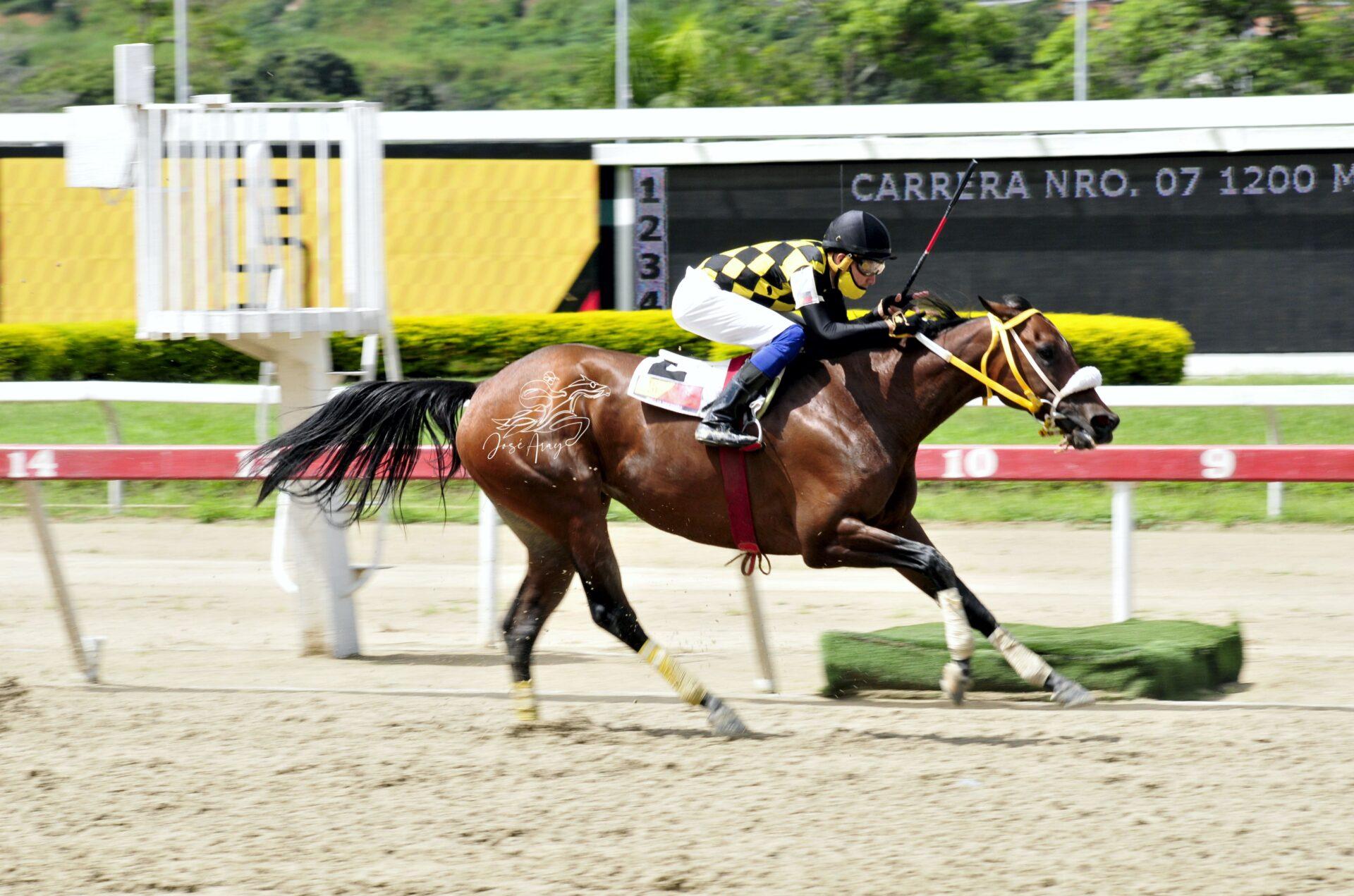 Mía Faustina, horse, Haras Oropal, Clásico Tapatapa, domingo, 29 de agosto de 2021, La Rinconada. Foto: José Antonio Aray