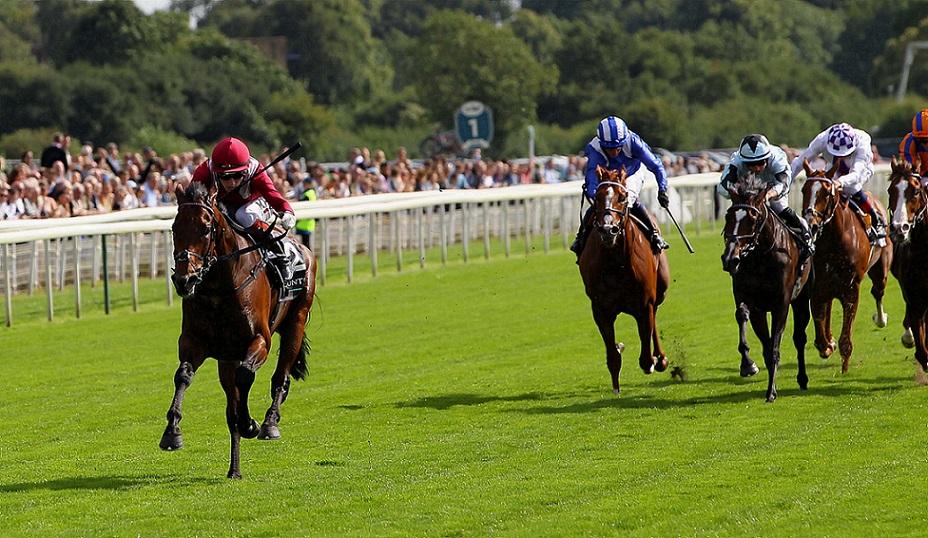 Mishriff, horse, Stud Prince A. A. Faisal, Juddmonte International, York, sábado, 18 de agosto de 2021. Foto: Racingphoto.com (Copyright)