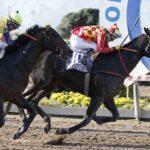 Río De Los Ciervos, horse, Constitution, Clásico Dos Mil Guineas, sábado, 4 de septiembre de 2021, Hipódromo de Chile. Foto Jaime Cortés