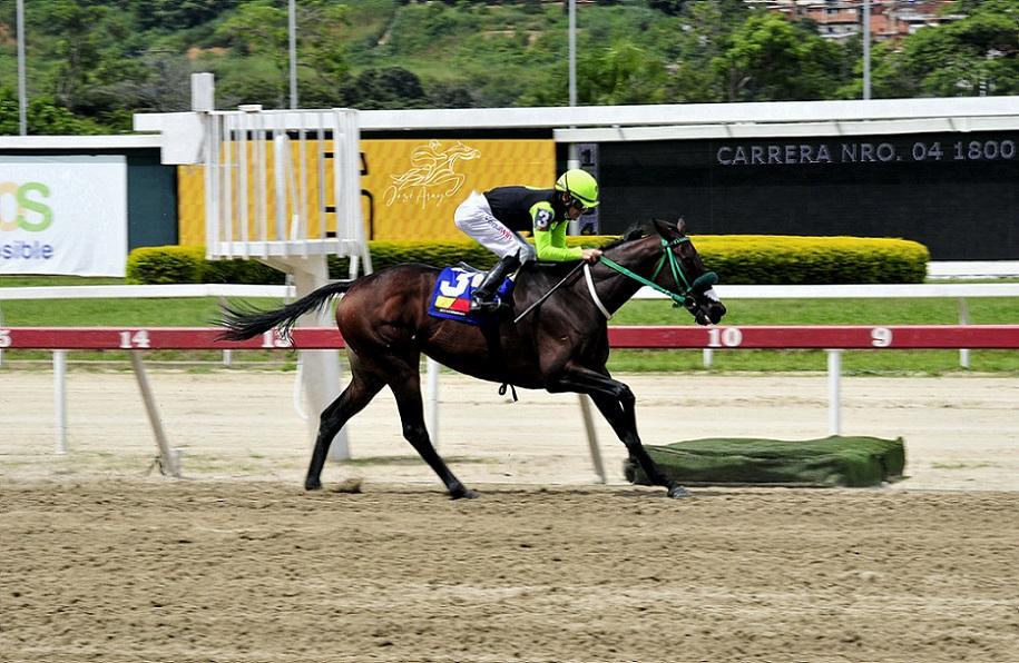 Sandovalera, horse, Haras La Orlyana, XVIII Clásico Millard Ziadie, domingo, 12 de septiembre de 2021, La Rinconada. Foto: José Antonio Aray