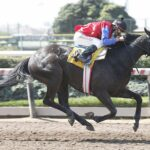 Tiberio Graco, horse, Haras San Patricio, Clásico Trabajadores de la Hípica, jueves, 23 de septiembre de 2021, Hipódromo de Chile. Foto: Foto Jaime Cortés
