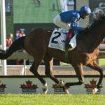Walton Street, horse, Cape Cross, Pattison Canadian International Stakes, sábado, 18 de septiembre de 2021, Woodbine. Foto: Michael Burns Photography