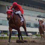 Zutta, horse, Cuadra San Jorge, Clásico Casty, sábado, 4 de septiembre de 2021, Hipódromo de Las Américas. Foto: Miguel Ángel Espinoza