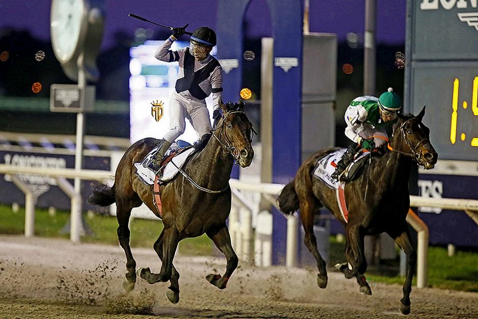 Aero Trem, horse, Shanghai Bobby, Longines Gran Premio Latinoamericano, domingo, 24 de octubre de 2021, Hipódromo de Maroñas. Foto: Gustavo Duprat