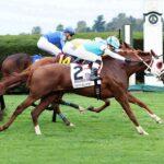 California Ángel, horse, California Chrome, J P Morgan Chase Jessamine Stakes, miércoles, 13 de octubre de 2021, Keeneland. Foto: Coady Photography