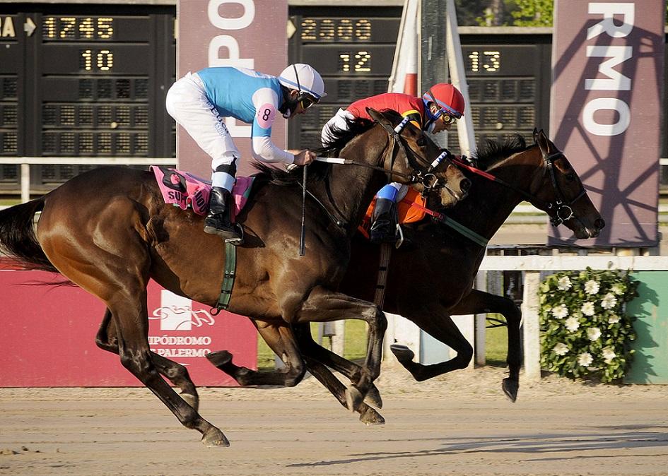Carta Embrujada, horse, Haras La Leyenda, Clásico Gran Premio Selección, sábado, 9 de octubre de 2021, Hipódromo de Palermo. Foto: Prensa Palermo