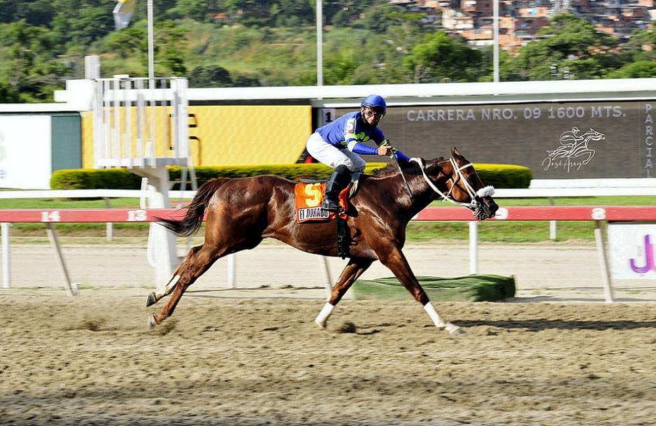 El Dorado, horse, Gala Award, Clásico Invitacional del Caribe, domingo, 3 de octubre de 2021, La Rinconada. Foto: José Antonio Aray