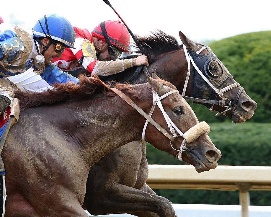 He´smyhoneybadger, horse, Daredevil, Perryville Stakes, sábado, 23 de octubre de 2021, Keeneland. Foto: Coady Photo