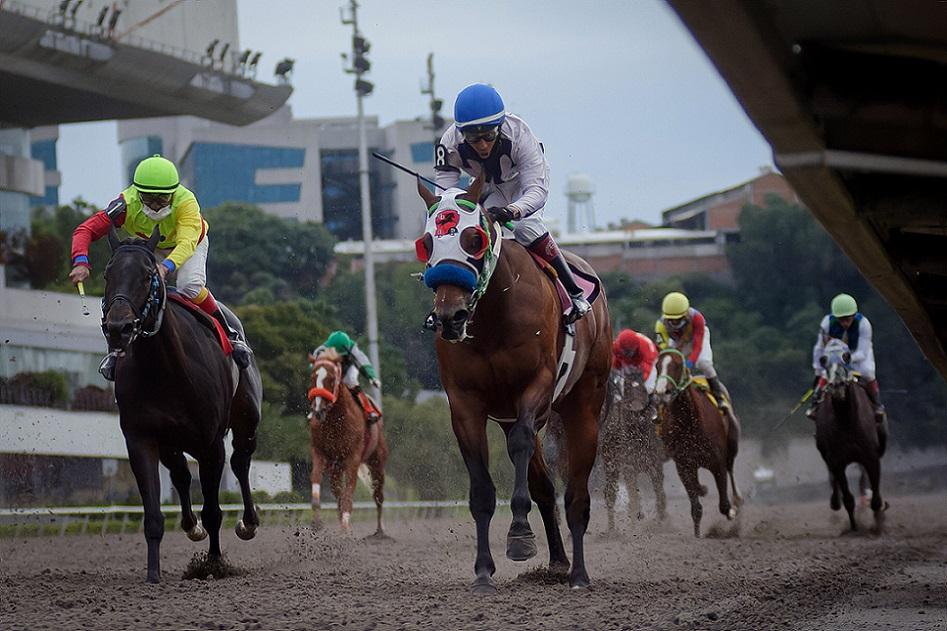 Harpeth River, horse, Bind, Clásico Anáhuac, sábado, 9 de octubre de 2021, Hipódromo de Las Américas. Foto: Miguel Ángel Espinoza