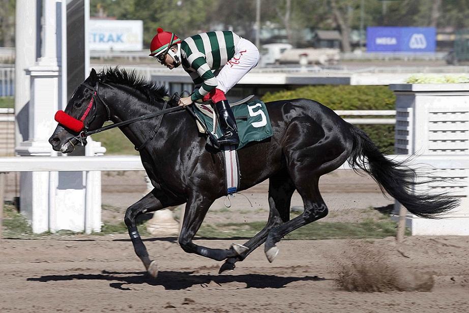 Puerto Chico, horse, Haras Las Camelias, Clásico Clear Song, lunes, 11 de octubre de 2021, Club Hípico de Santiago. Foto: Jaime Cortés