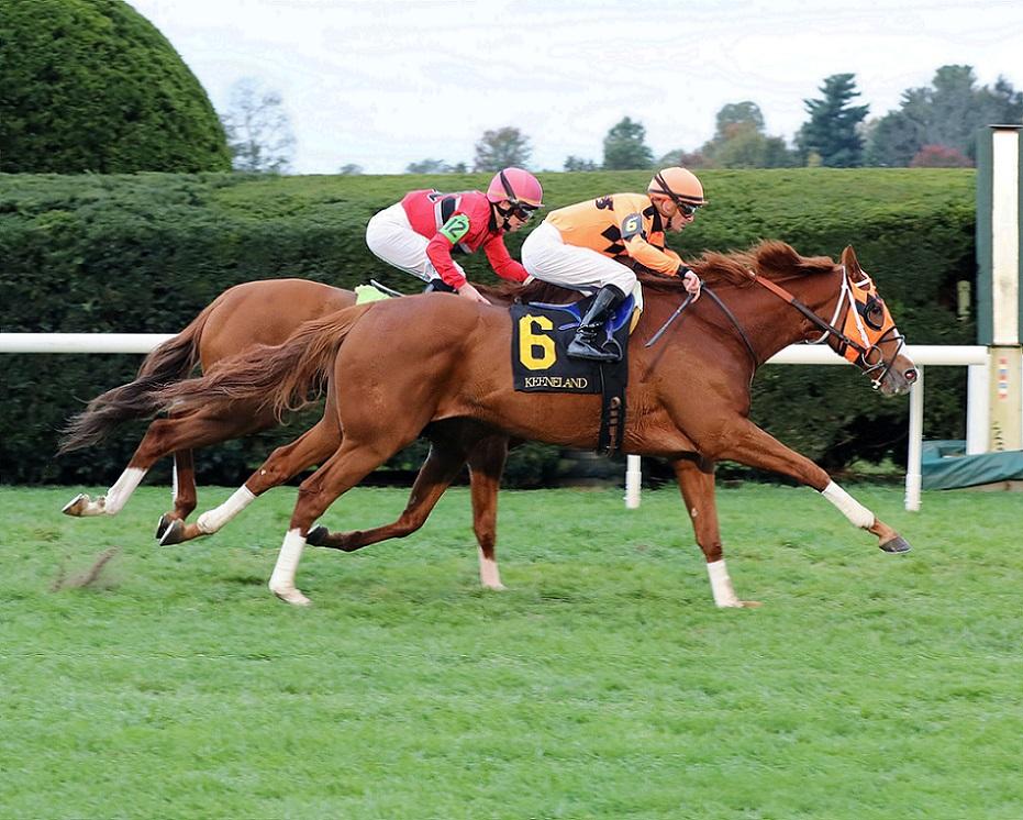 Spooky Channel, horse, Calumet Farm, Sycamore Stakes, viernes, 22 de octubre de 2021, Keeneland. Foto: Coady Photo