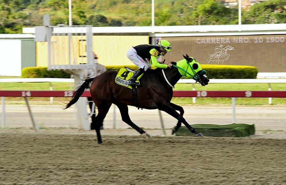 Sandovalera, horse, Haras La Orlyana, XVI Clásico Cruz Del Ávila, domingo, 3 de octubre de 2021, La Rinconada. Foto: José Antonio Aray