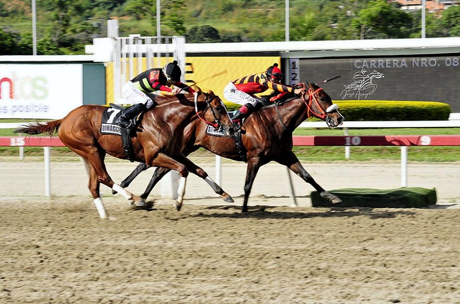 Strength Mask, horse, Jupiter Pluvius, Clásico Sprinters, domingo, 3 de octubre de 2021, La Rinconada. Foto: José Antonio Aray